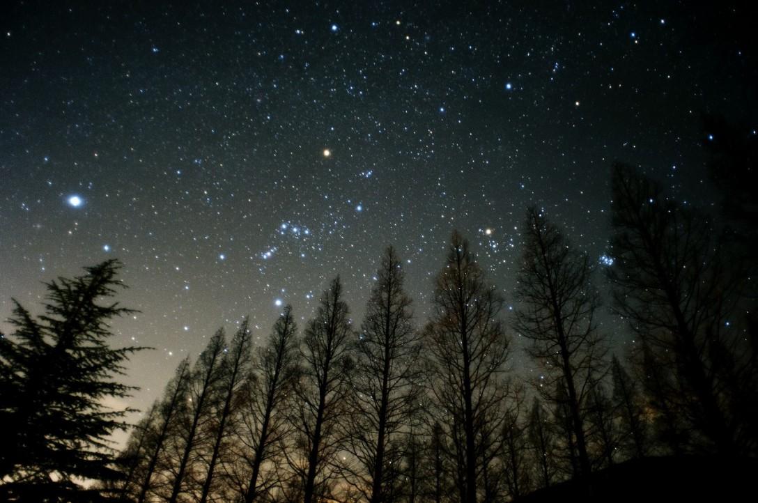 滋賀県 メタセコイア並木の星空