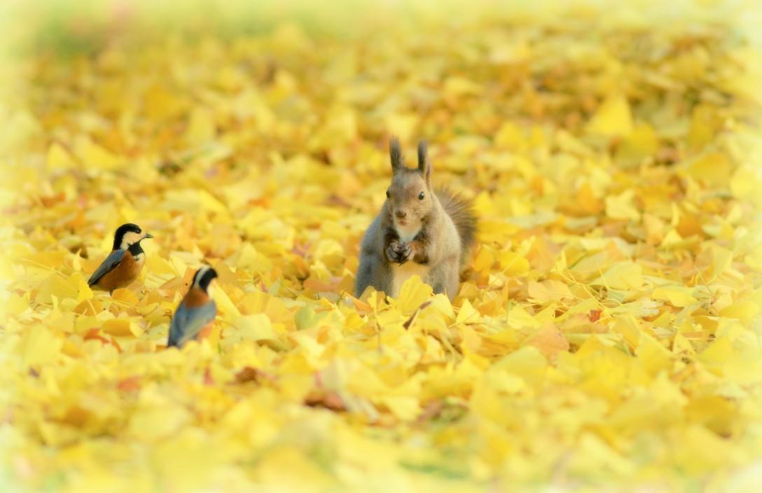 秋色カーペットの上で♬