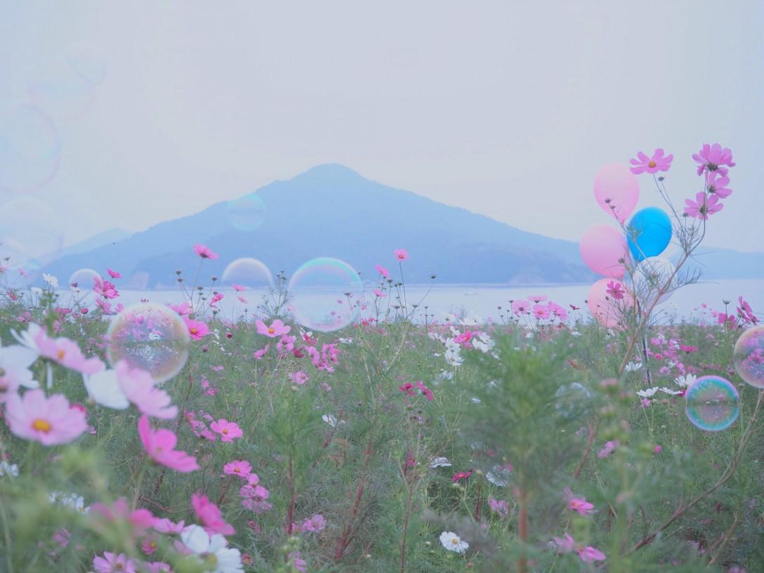 香川県三豊市 フラワーパーク浦島