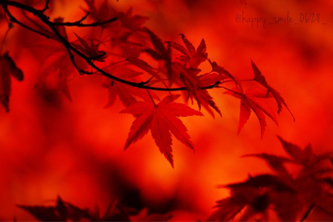 国営昭和記念公園 -日本庭園の紅葉 2015-