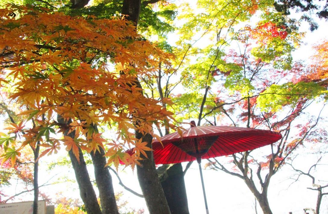 【紅葉スポット】絶景!登山も楽しめる、栃木県・太平山。