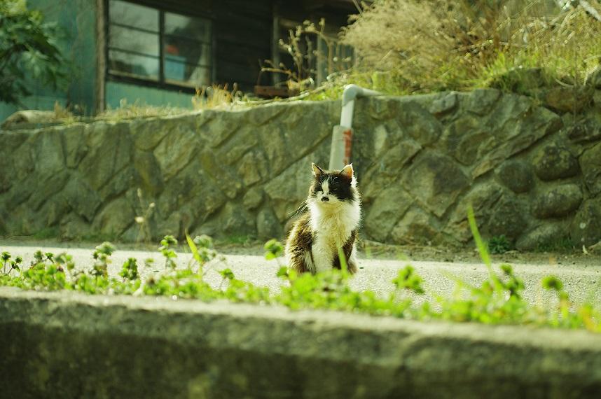tashirojima005