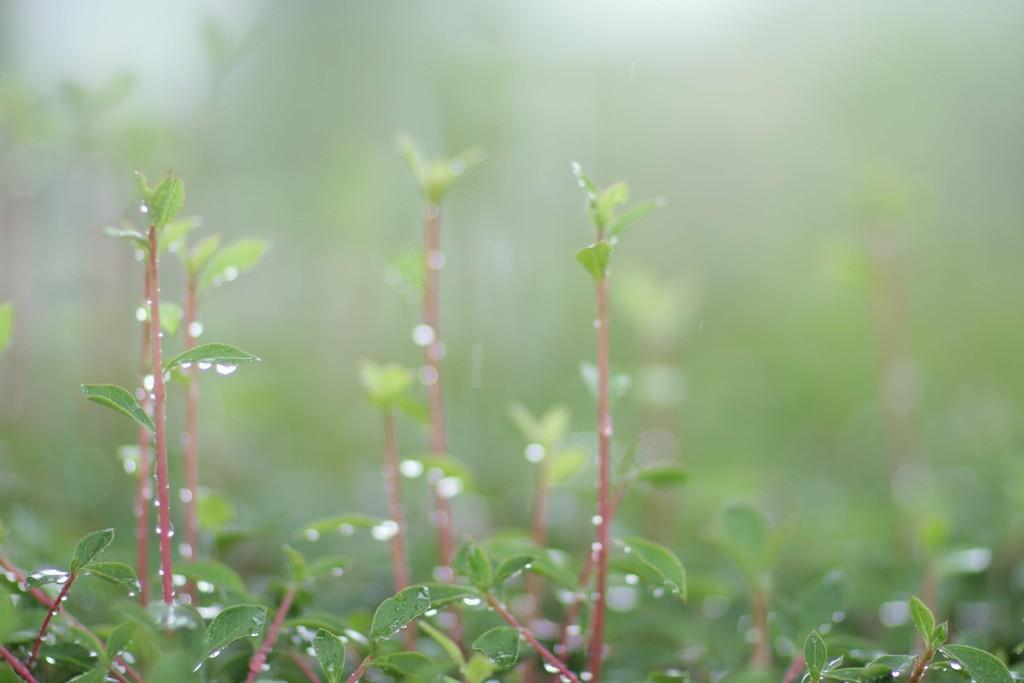 【東京】雨の日に行きたい撮影スポット《8選》