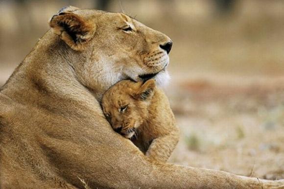 【泣ける】動物の家族愛がたまらない!心にしみる写真たち《21選》
