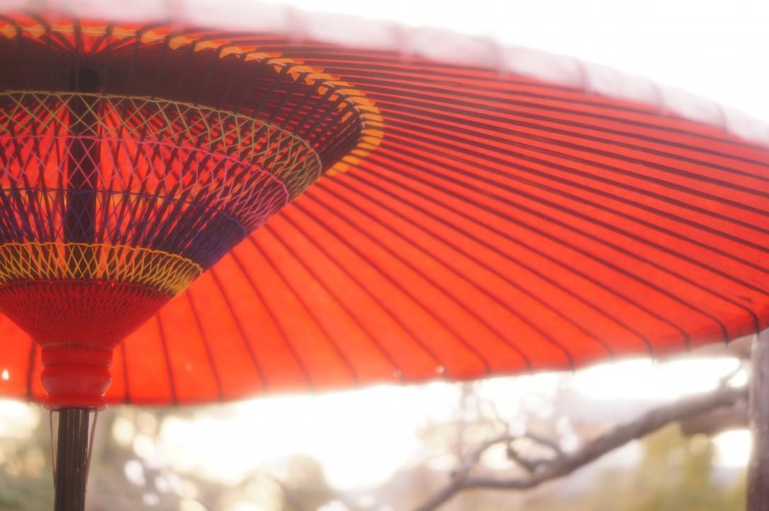 梅の木の下に傘が置いてあり、フンイキありました。
