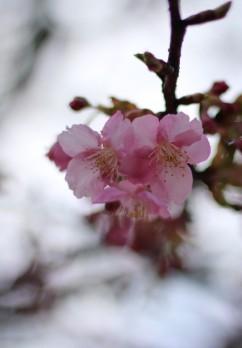 五色桜大橋と江北JCTに桜を添えて…