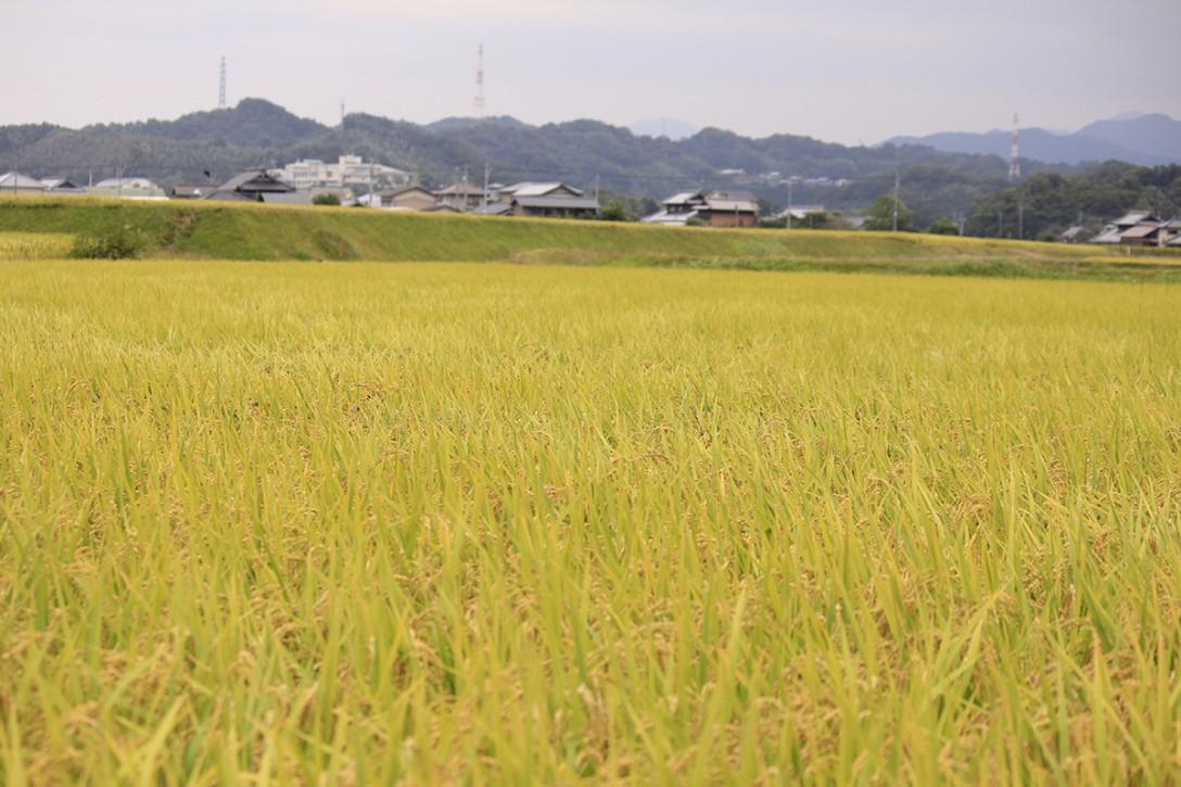 sake036