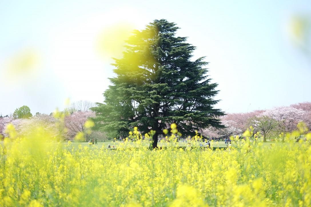 昭和記念公園✿