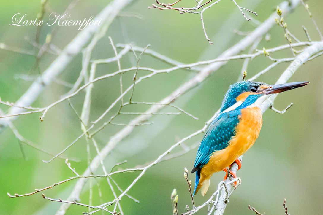 水元公園の野鳥