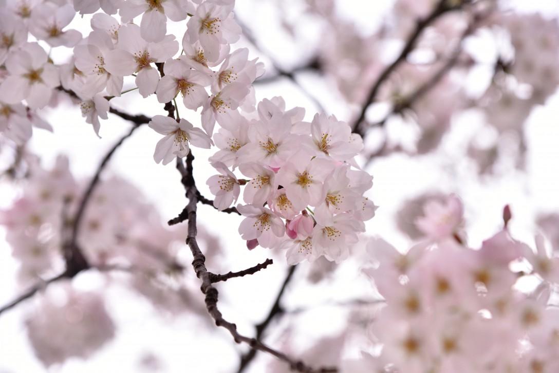 荒川自然公園の春の花とサンシャイン水族館