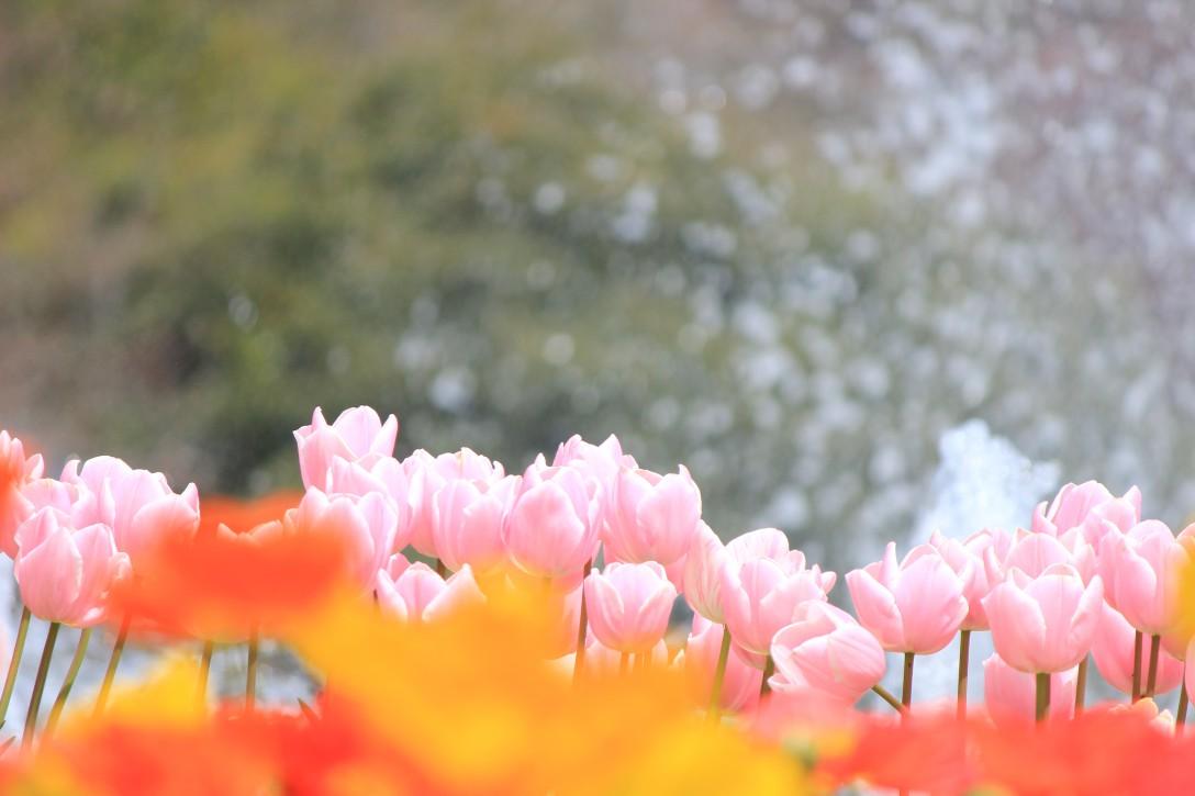 春色いろいろ