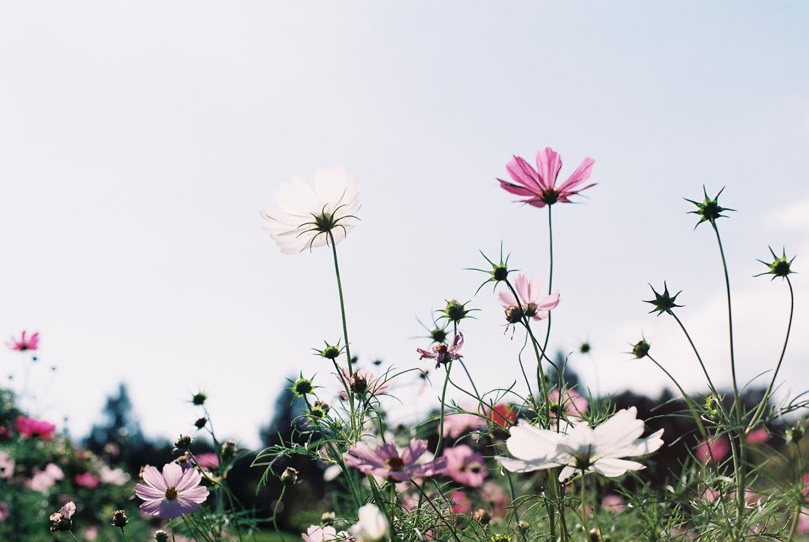 ◆写真⑪◆C200-OM1-Mizuho2