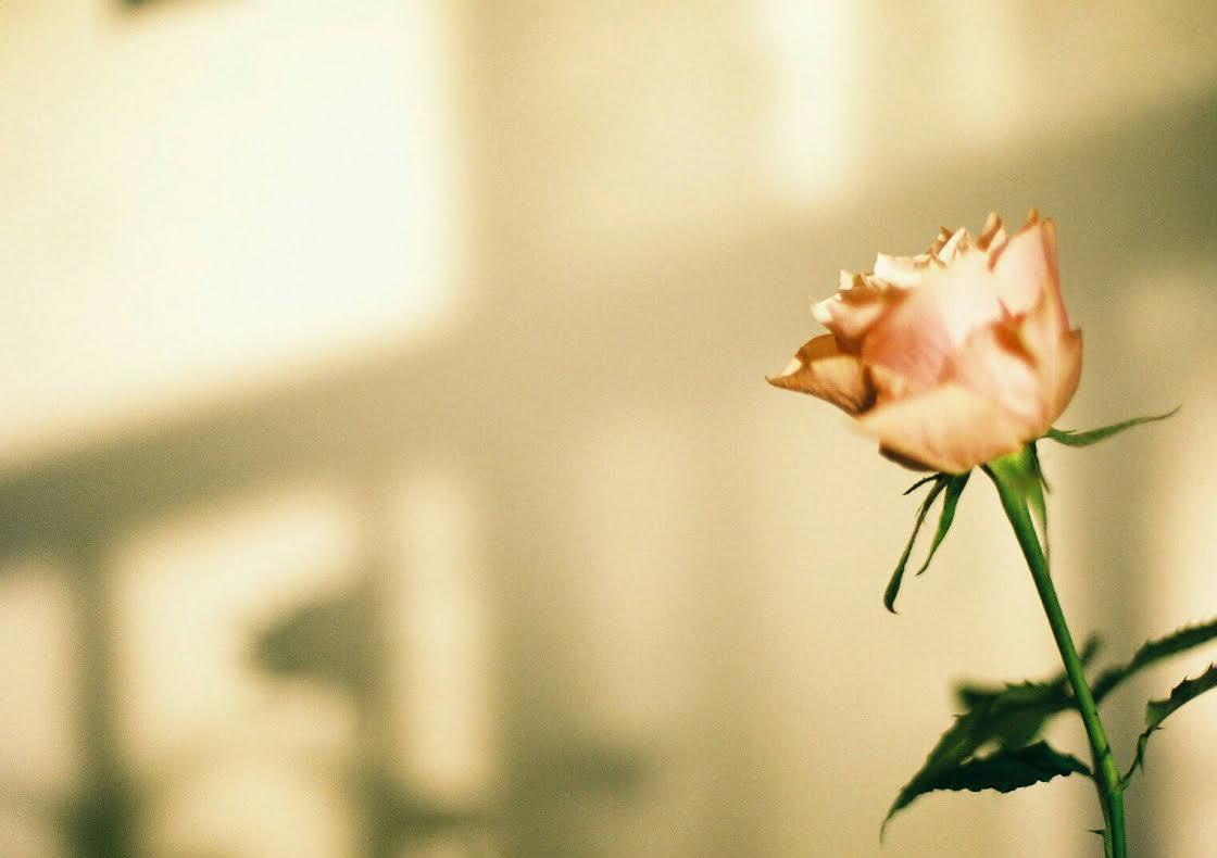 ◆写真⑱◆premium400-Nikon FE-おと