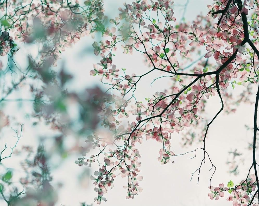 ◆写真③◆PRO160NS-Pentax 6x7-emi②
