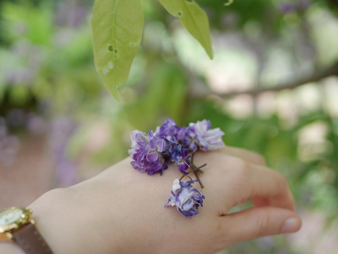 旅先で見つけた藤の花