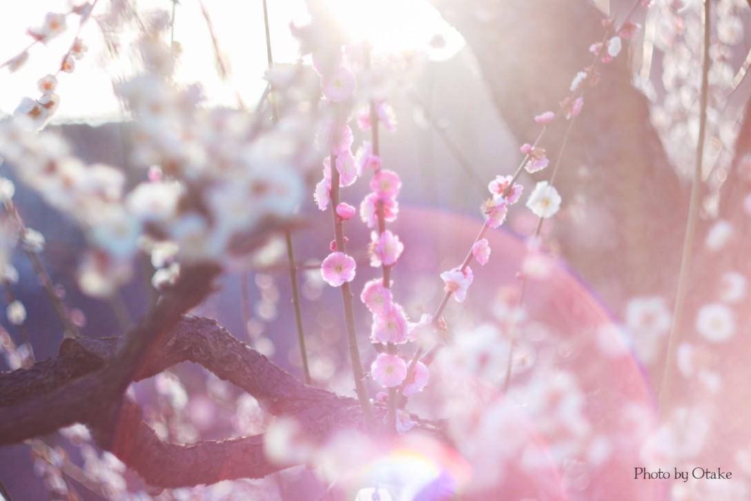 春の黄色い絨毯