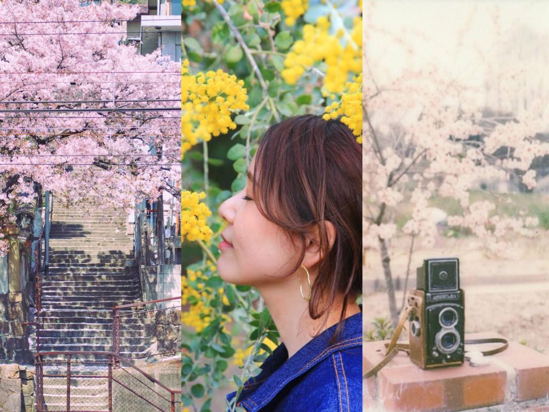 「春」の写真展~デジタルカメラとフィルムカメラ~