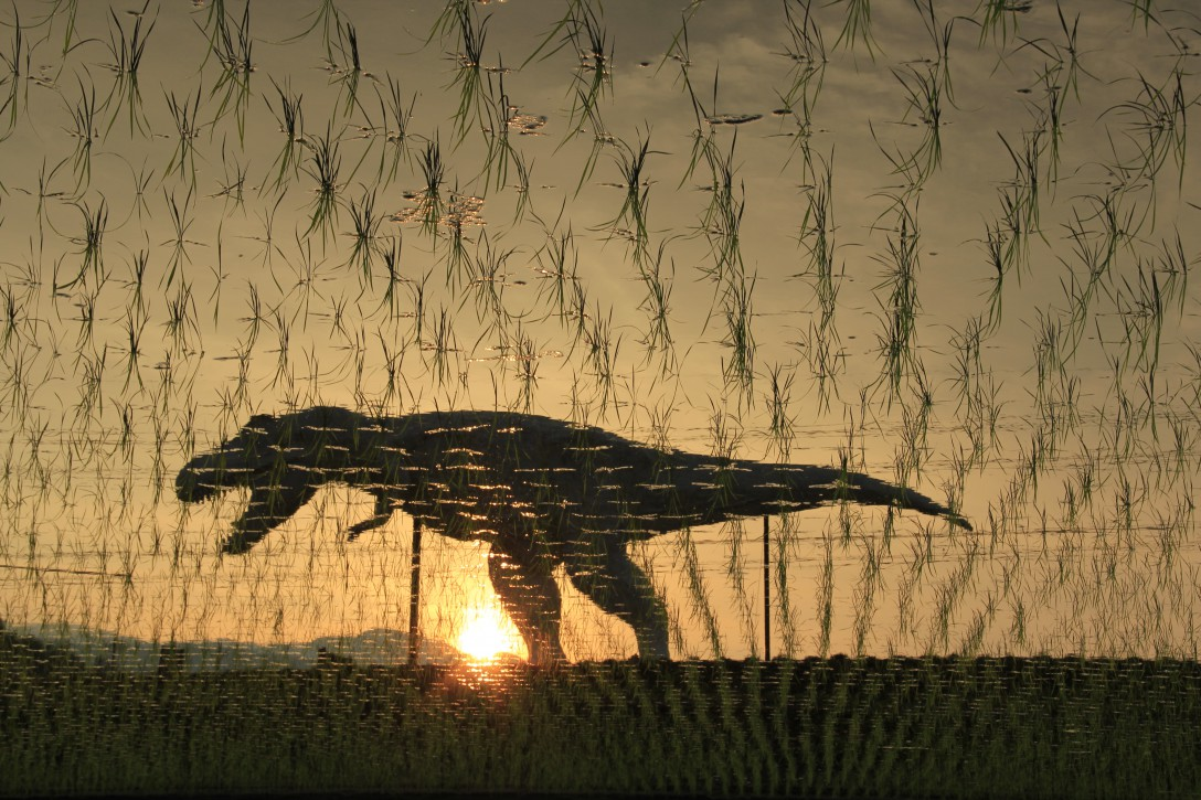 田植えするザウルス