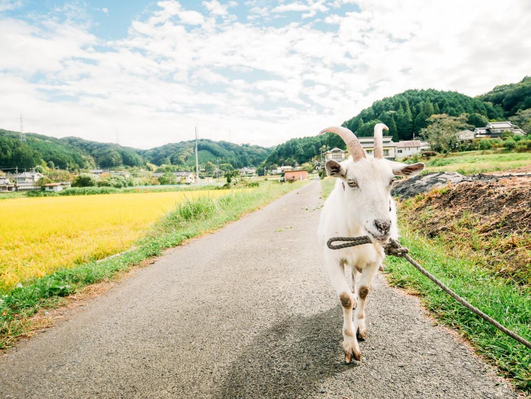 岡山県農村企画_58