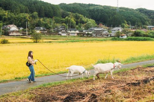 岡山の農村でヤギとお散歩?!